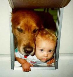 Проблемы общие для собак и детей